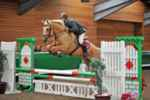 FOR SALE. Rainstown Pansy - 6y 16.2hh Palomino Irish Sports Horse